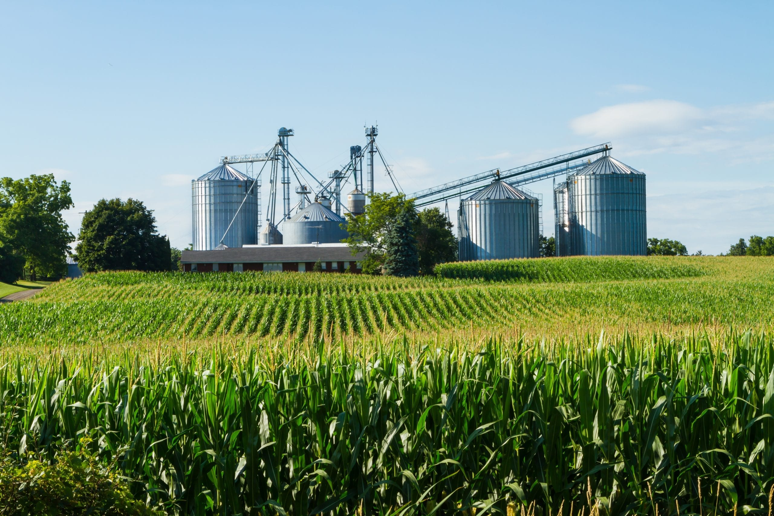 Cornfield,With,Silos,And,Farm,In,The,Distance